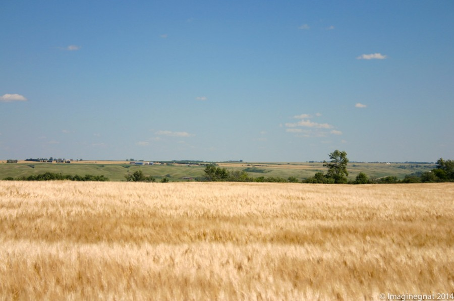 Gnat_Fargo2008_Journey1_2