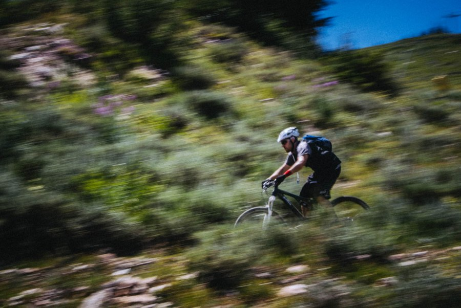 Gnat_UtahFRS_12
