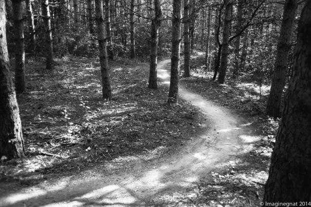 GNAT_Leica_Trail